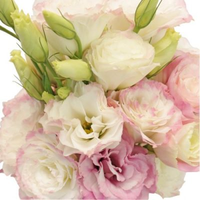 Designer_Lisianthus Flowers