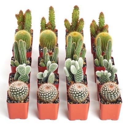 Boho Fiesta Bridal Shower Theme Live Cactus Favors