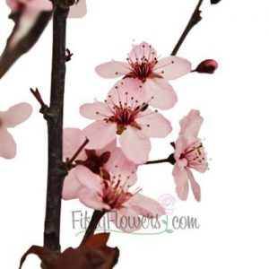 Asian Themed Wedding and Bridal Shower Cherry Blossom Branches