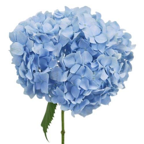 Blue Hydrangea Flowers For A 'Something Blue' Bridal Bouquet