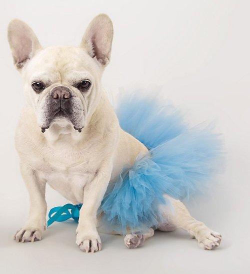 Pet Tutu Something Blue Wedding Ideas