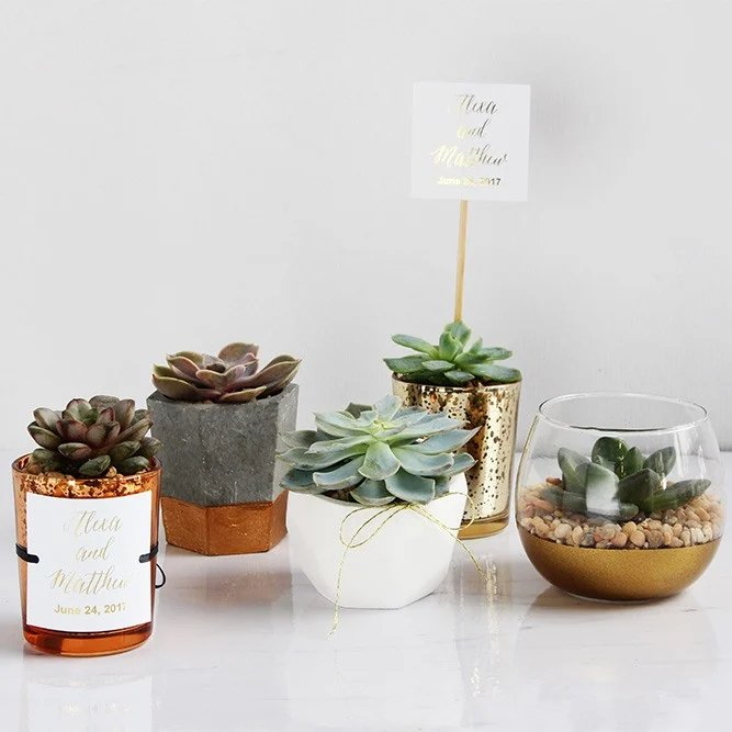 Bohemian Wedding Live Succulents Decor and Favors