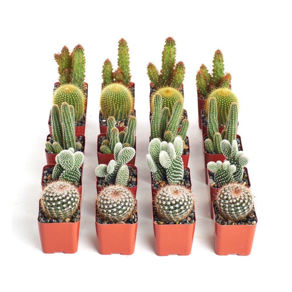 Bohemian Desert Inspired Cacti Wedding Favors