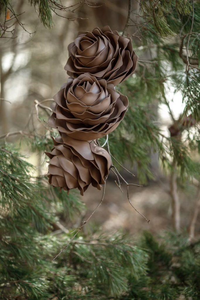 Fairy Giant Pine Cones
